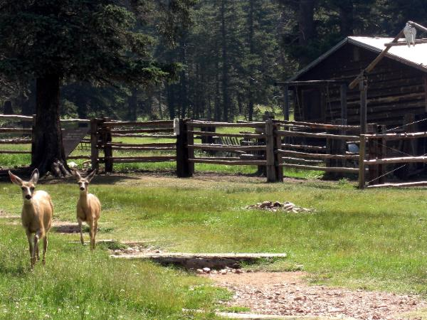 The deer followed the trail and the boys towards the Staff Cabin