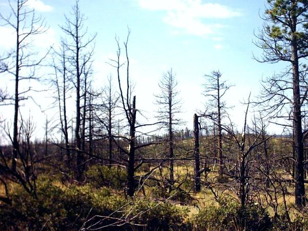 Damage from the 2002 'Ponil Complex' fire.
