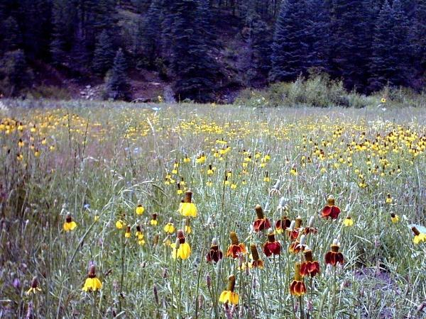 Close up of the Rich Cabins Meadow.